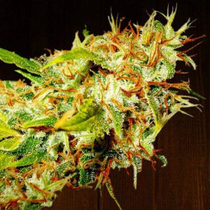 Zamaldelica Standard Cannabis Seeds