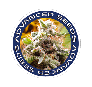 Advanced Seeds | Chosen Seeds UK | Weed Seeds Delivered UK | Weed Seeds Delivered To USA