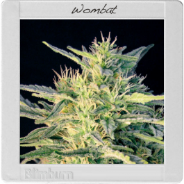 Wombat Cannabis Seeds