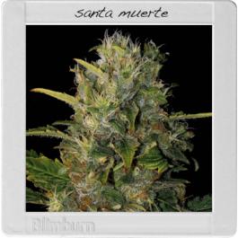 Santa Muerte Cannabis Seeds