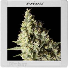 Narkosis Cannabis Seeds