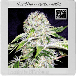Northern Automatic Cannabis Seeds
