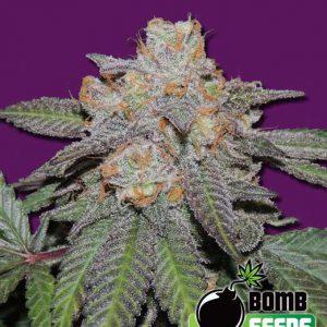 Strawberry Ice Cannabis Seeds