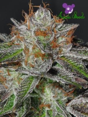 Bruce Banner #3 Cannabis Seeds