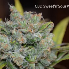 CBD Sweet and Sour Widow