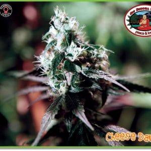 Cheese Dawg Cannabis Seeds