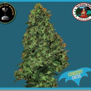 Cheesy Dick Cannabis Seeds