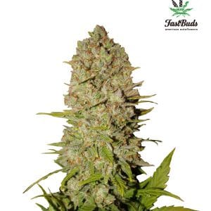 Pineapple Express Cannabis Seeds