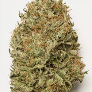 Blue Dream Auto Cannabis Seeds