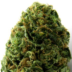 Massive Midget Auto Cannabis Seeds