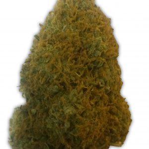 Champion Cannabis Seeds