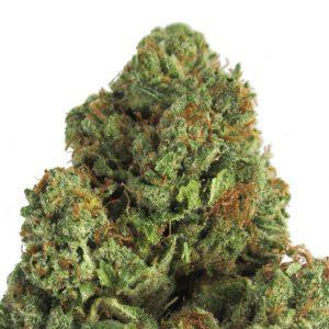 Midnight Mass Cannabis Seeds