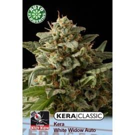 White Widow Auto Cannabis Seeds
