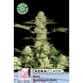 Bubblegum Auto Cannabis Seeds