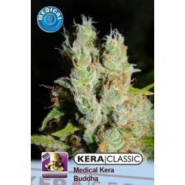 Medical Buddha Cannabis Seeds