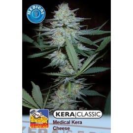 Medical Cheese Cannabis Seeds