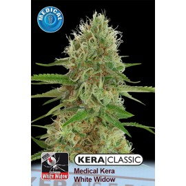 Medical White Widow Cannabis Seeds