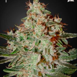 Lemon Skunk Cannabis Seeds