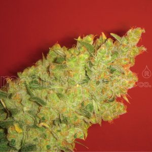 Jack The Mota / The Speck Cannabis Seeds