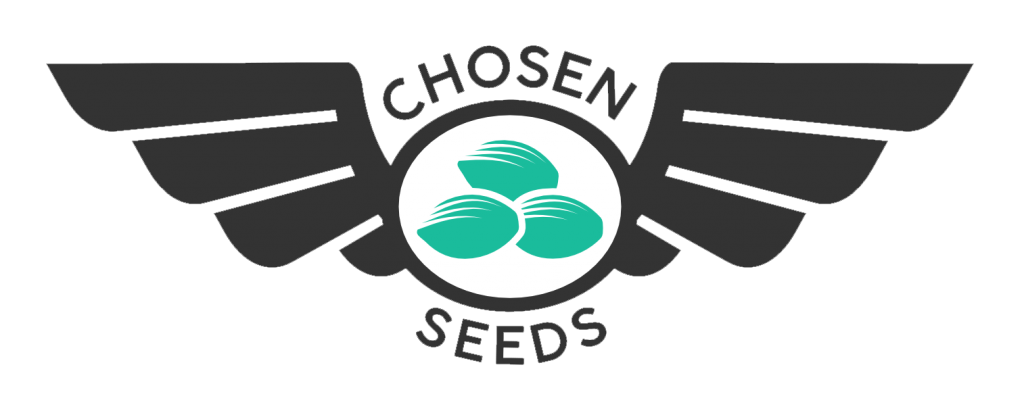 Buy Cannabis Seeds Chosen Seeds Delivered To Your Door