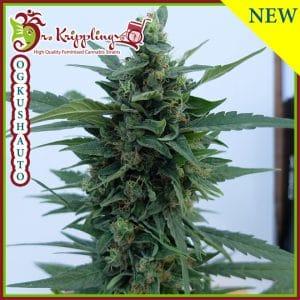 OG Kush Auto Cannabis Seeds