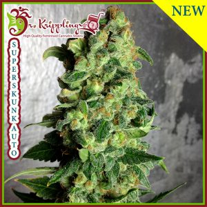 Superskunk Auto Cannabis Seeds