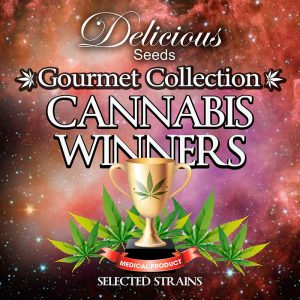 Cannabis Winners 2