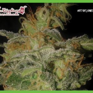 Incredible Bulk Cannabis Seeds